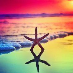 Starfish   #ocean #starfish #travel #fareboom #fareboom #international #airfare #paradise #island #vacation #travel #beach #Caribbean #tropical