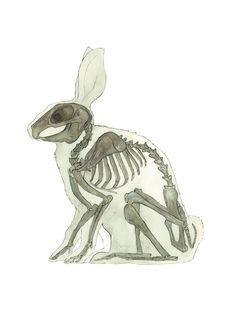Lol the gross teeth match Bunbun..Rabbit, bunny skeleton, animal, anatomy, print, watercolor painting, art,drawing, picture