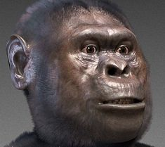 Forensic facial reconstruction of Australopithecus species - A. afarensis. Image credit: Cicero Moraes / CC BY-SA 3.0.