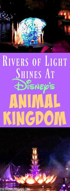 Rivers of Light Shines Bright At Animal Kingdom. This nighttime show at Walt Disney World embraces the magic of nature. #DisneySMMC