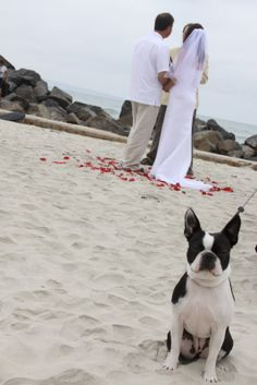 bride and groom beach wedding with best dog