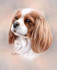 VK is the largest European social network with more than 100 million active users. King Charles Spaniel, Cavalier King Charles, King Charles Dog, Portraits Pastel, Dog Portraits, Animal Paintings, Animal Drawings, Roi Charles, Dog Art
