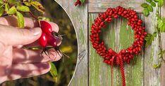 Gör finaste kransen av gladröda nypon   Land.se Land, Medan, Wreaths, Christmas, Decor, Xmas, Decoration, Door Wreaths, Weihnachten