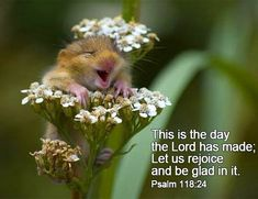 Let's rejoice!