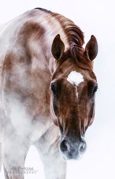 Beautiful Horse Photos, Horse Pictures, All The Pretty Horses, Beautiful Horses, Animals Beautiful, Horse Drawings, Appaloosa, Wild Horses, Equine Photography