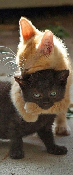 The orange cat says best friends forever the Black cat says get off me