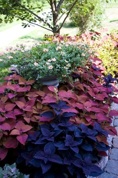I see 5 different coleus in the bed