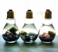Miniterrários ficam lindos dentro de lâmpadas. (via @soapdeligirl) Clique e veja como utilizar lâmpadas na sua decoração!