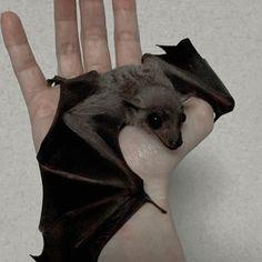 I want to rescue a bat. or start a bat farm. so cute, love them so much! Animals And Pets, Baby Animals, Funny Animals, Cute Animals, Unique Animals, Cute Creatures, Beautiful Creatures, Animals Beautiful, Murcielago Animal