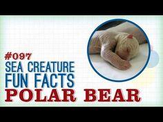 Polar Bear Newborn: Sea Creature Fun Facts - World Oceans Day