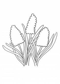 kleurplaat tulp narcis hyacint het voorjaar is in aantocht
