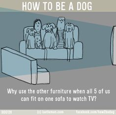 Dogs: HOW TO BE A DOG: Why use the other furniture when all 5 of us can fit on one sofa to watch TV?