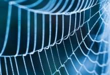 Could Artificial Spider Silk Become the Next Best Material to be Used in Medical Implants?