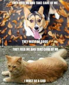 "Dog: ""They must be gods""; Cat: ""I must be a god"" #funny"