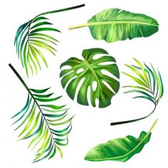 Set of botanical vector illustrations of tropical palm leaves in a realistic style. Free Vector
