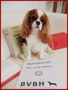 hundebiss wesenstest schmerzensgeld hund anwalt tierrecht http://www.tierrecht-anwalt.de bundesweite Rechtsberatung Tierrechtskanzlei Ackenheil Anwaltskanzlei Tieranwalt Ackenheil