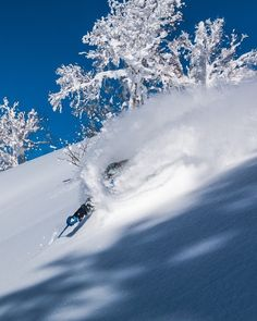 On the night of the insanity that is the final presidential #debate2016. Let's think about something amazing like #skiing #powder in #Japan. Plan your escape for #JAPANuary with us at #SASSjapan.