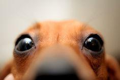 miniature dachshund says...hi...who are you?
