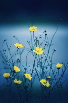 Flor 374