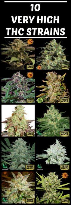 Anatomy of a marijuana plant. Cannabis plant diagram. Weed Plant ...