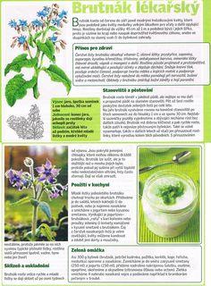 - Herb Garden, Aromatherapy, Life Is Good, Detox, Healing, Herbs, Gardening, Plants, Lawn And Garden