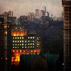 Toronto's Mixed Forest in twilight mood.