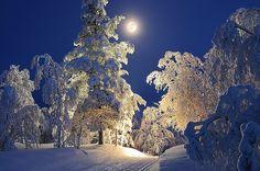 Moonlit Skiing Trail in Saariselkä.  Cabins and activities in Saariselkä http://www.saariselka.com