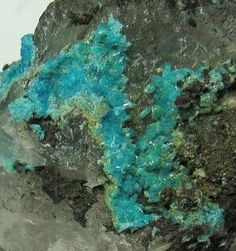 Turquoise, CuAl6(PO 4)4(OH)8·4H 2O, microcristaux, Bishop Mine, Lynch Station, Campbell County, Virginia, USA