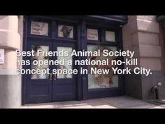 Best Friends Pet Adoption Center opens in New York City | Best Friends Animal Society–New York