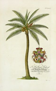 Georg Dionysius Ehret Botanical Prints The Natural History of Barbados 1750