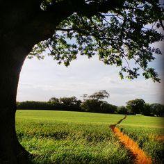 A pathway leading into the distance .. #path #farm #tree #nature #southeast #agriculture #bikeride #contrast #summer #sky #southdowns #nationaltrust #landscape #landmark #wildlife