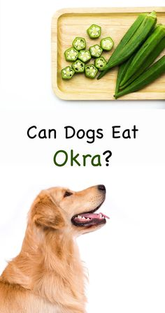 Can dogs eat okra as a treat or part of their normal diet? Discover whether dogs can have fried or raw okra to eat, in this guide to okra for dogs. Fun Facts About Dogs, Dog Facts, Can Dogs Eat Okra, Dog Treat Recipes, Dog Food Recipes, Puppy Feeding Schedule, Summer Dog Treats, Hypoallergenic Dog Food, Organic Dog Treats
