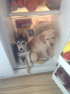 """""""No, it's hot! We live here now."""""""