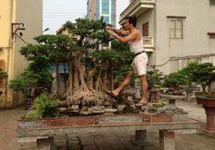 Vietnamese bonsai (Hòn non bô), it's massive!  See: http://www.bonsaiempire.com/origin/what-is-bonsai  #bonsai #vietnam
