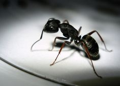 Healing with Ants and Other Creepy Crawlers
