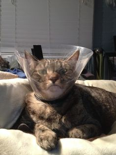 17 Cats Who Have Been Totally And Utterly Betrayed