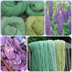 """Dyeing with lupins. The blog is in foriegn, a germanic language I'd guess, google translate will pobably help, all I got was """"lupinen"""" and """"200g merino"""". which were both pretty easy to translate"""