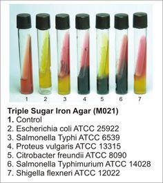 Triple Sugar Iron Agar | Microbiology | Dehydrated Culture Media | Biochemical Identification Media | Animal based Media