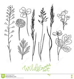 Wild Flowers Hand Drawn Set. Ink Herbs. Herbal Medicine Vector Illustration. Stock Vector - Image: 74411460