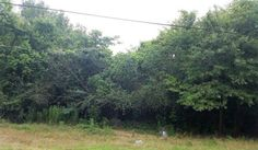 Looking for small acreage?  Look no further. This 3.73 Acres is just perfect to build a home.