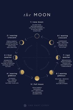 A guide to the lunar cycle- what each of the moon phases are called, what they indicate, and how to be most aligned with them. A guide to the lunar cycle- what each of the moon phases are called, what they indicate, and how to be most aligned with them. Moon Magic, Lunar Magic, Astrology Zodiac, Moon Zodiac, Astrology Report, Zodiac Taurus, Book Of Shadows, Stars And Moon, Witchcraft