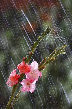 <3 the rain