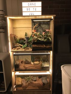 Leopard and crested gecko set up. Not complete but almost there!