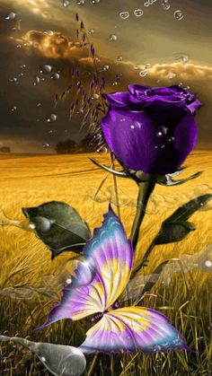 mariposa sol mixed - Google+janie*amor. I LOVE YOU BABY  SO MUCH!!#