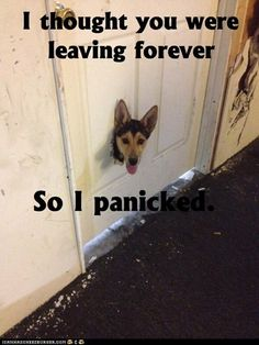 I'm pretty sure this is what goes through all of my needy animals heads