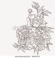 Blossoming peony flowers on white. Vector illustration. Perfect for background greeting cards and invitations of the wedding, birthday, Valentine's Day, Mother's Day.