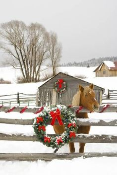 Horse on Soward Ranch Decorated for the Holidays Antelope Valley Creede Colorado Photographic Print by Design Pics Inc at Art.com