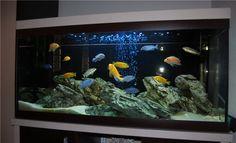 аквариум с цихлидами дизайн 16 фото dizajnbox.ru