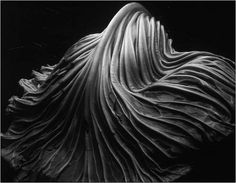 Edward Weston, Cabbage Leaf, 1931. Gelatin Silver Print.1968.7.2 by TrinaStearns7, via Flickr
