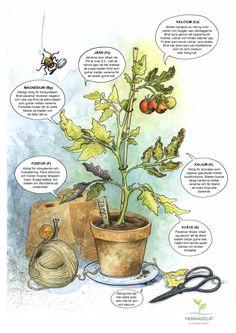 Growing Vegetables, Growing Plants, Garden Inspiration, Vegetable Garden, Gardening Tips, House Plants, Stockholm, Drawings, Green